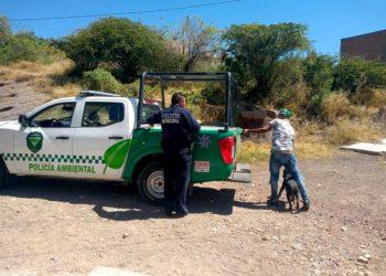 Primeros detenidos por violentar reglamento de Protección Animal, multas de 1500 pesos