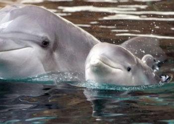 """Delfines mutilados aparecen en playas de España; a uno le grabaron """"Juan"""" con un cuchillo (FOTOS)"""